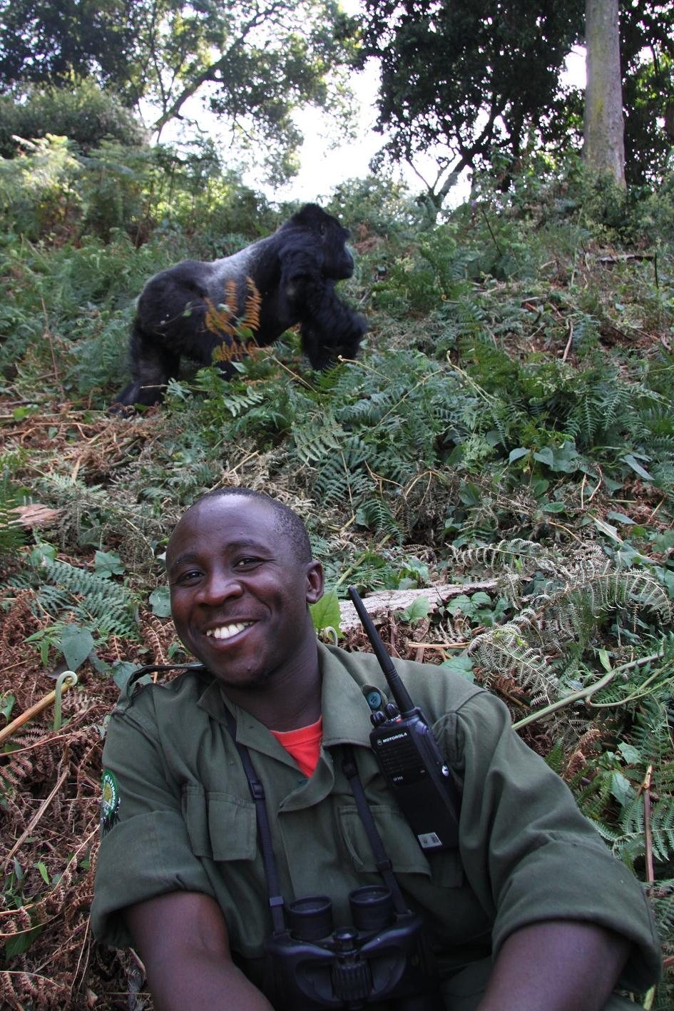 Gorilla Tracking - Guide Uganda, Bwindi Nationalpark