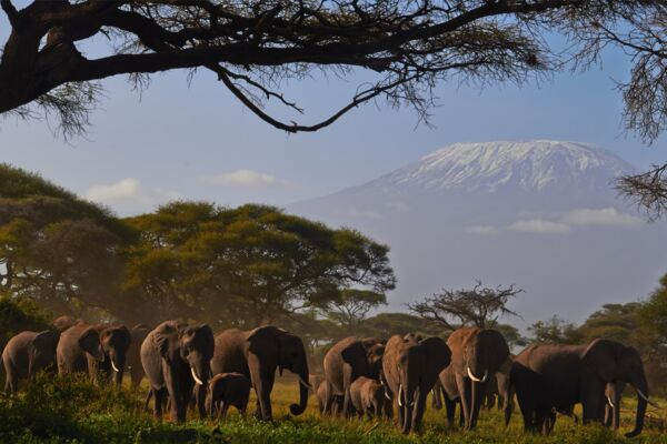 Mount Kenya and Kilimanjaro - the great mountain safari