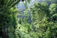 Jungle of Rwenzori (DRC), Trek in Congo